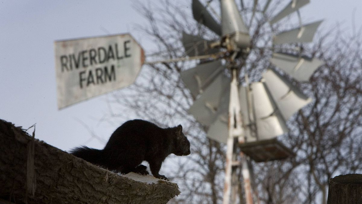 A report by Toronto's city manager recommends selling or closing Riverdale Farm.