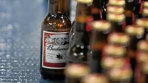 Freshly filled bottles travel down a conveyor belt on their way to packaging at Labatt London Brewery.