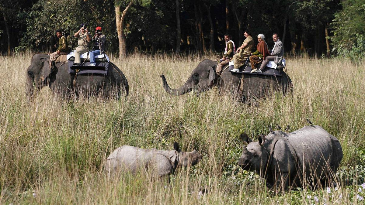 Tourists ride elephants and watch one-horned rhinoceros at the Pobitora wildlife sanctuary, about 50 kilometers (31 miles) east of Gauhati, India.