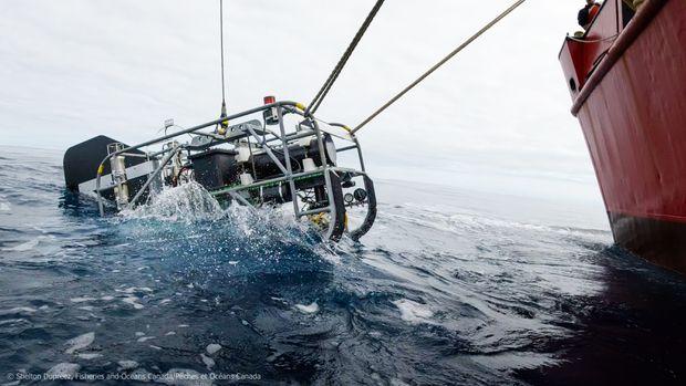 Underwater volcano expedition off coast of Vancouver Island reveals hidden world