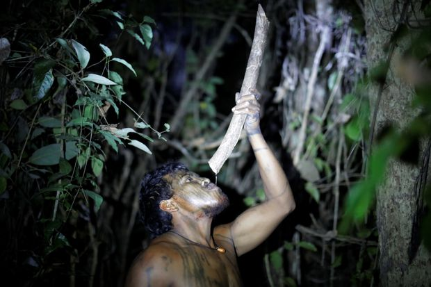 Illegal Loggers Shoot Amazon Forest Defender Dead; Wound Another
