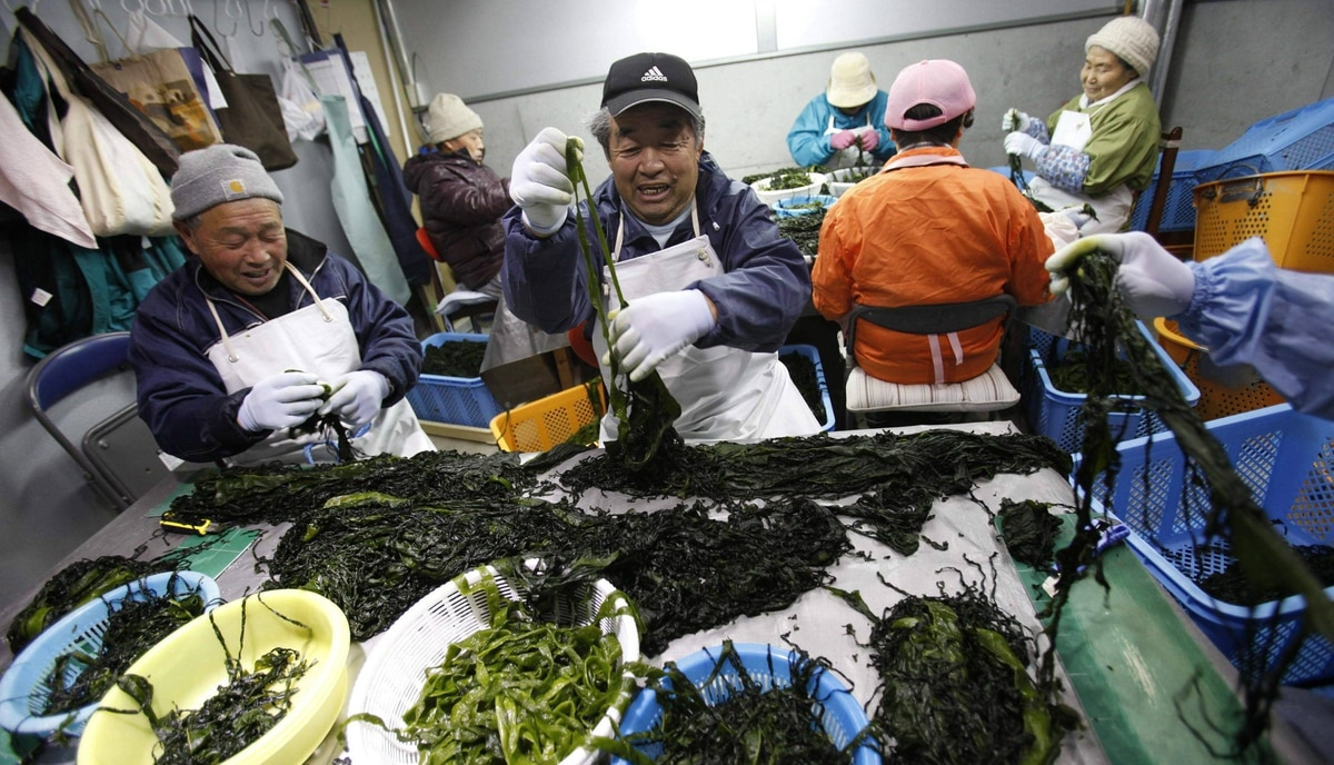 Seaweed farmers prepare seaweed for shipment in their newly built workplace in Minamisanriku town, in Miyagi prefecture, northeastern Japan February 23, 2012. Traditionally farming has been carried out in family units, however after the tsunami the farmers of Minamisanriku created a guild to combine their businesses.
