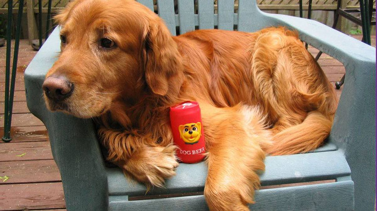 "From Tony Dell'Osso in Toronto: This is our 14 year old golden retriever ""Jake"" hanging around on our deck in his chair."