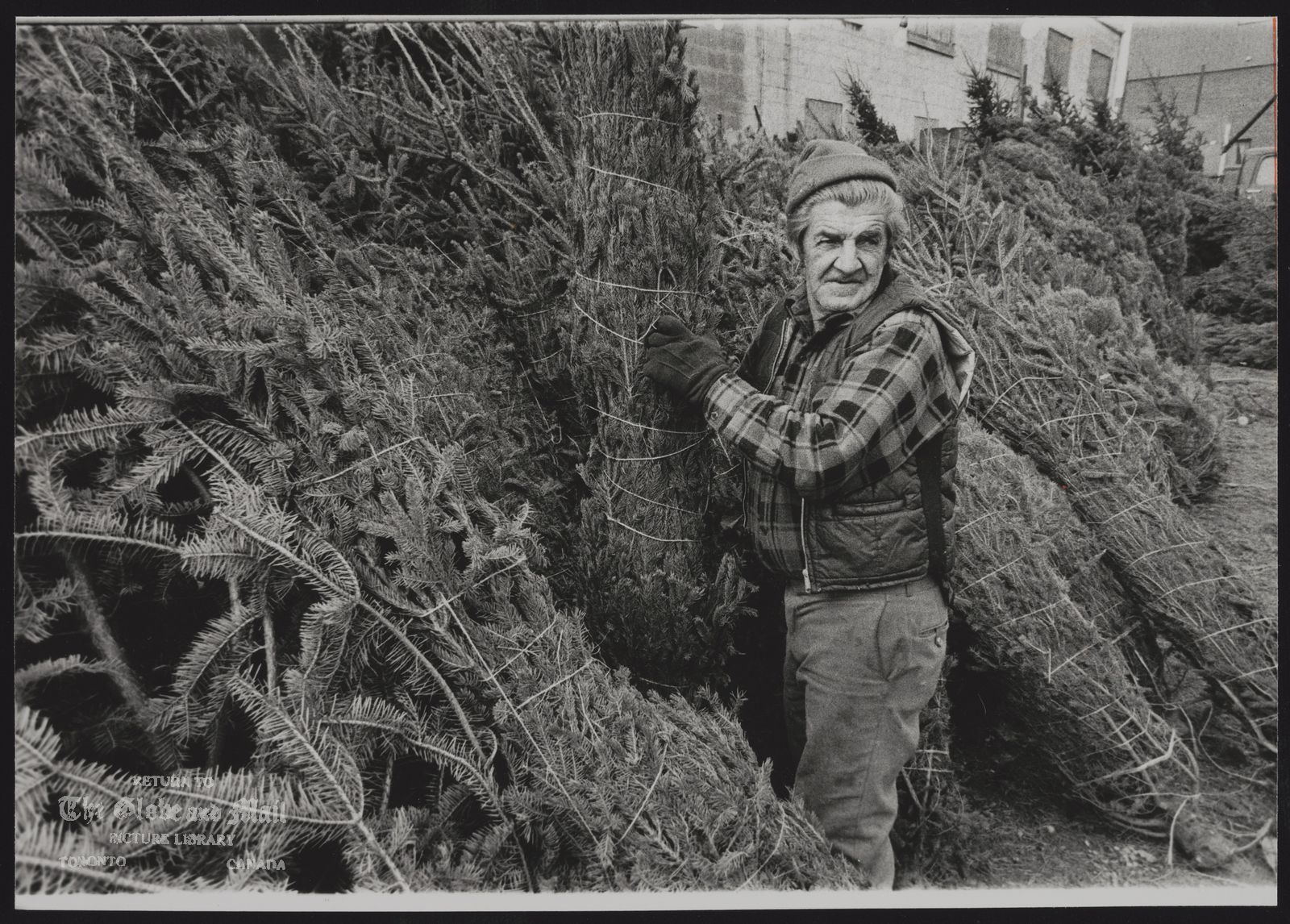 CHRISTMAS TREE Joe Chiasson stacks Christmas trees on a Toronto lot. Tree shortages and increasing costs will raise prices this year.