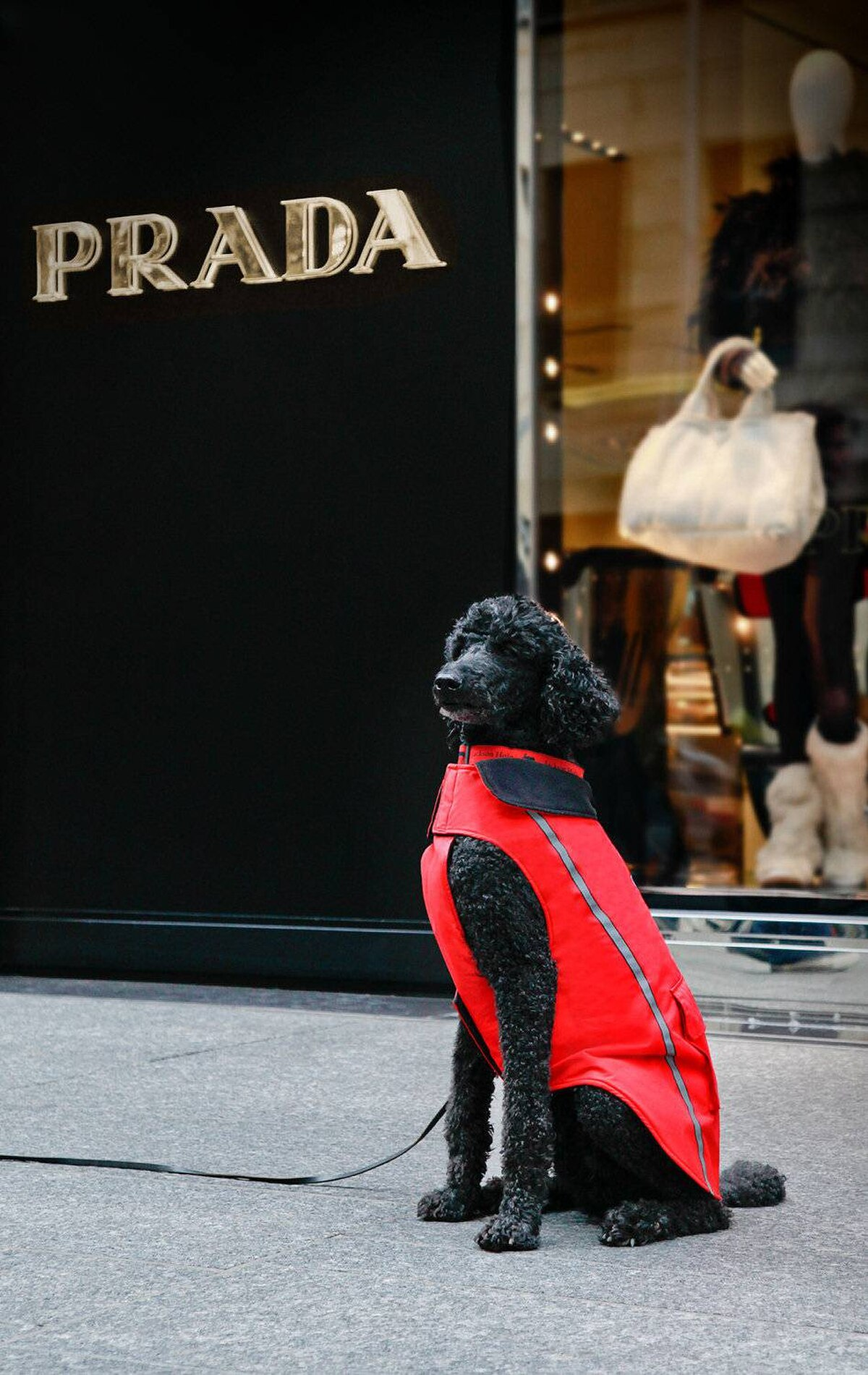 Chief looking regal outside the Prada store in his red Snow Seeker coat.