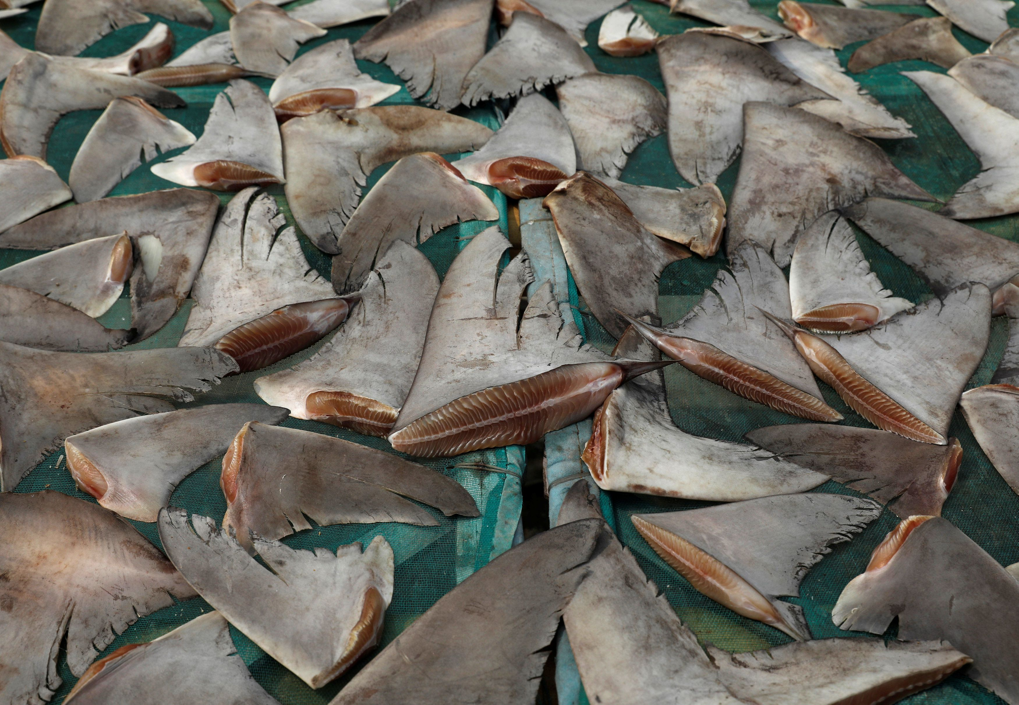 Newly passed legislation expected to make shark finning illegal as early as Friday
