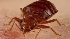Bedbugs are giving Vancouver's libraries a headache.