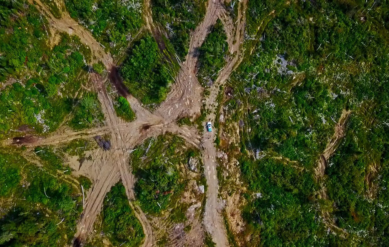 'Logging scars' show impact of deforestation in Canada is worse than we know, research finds