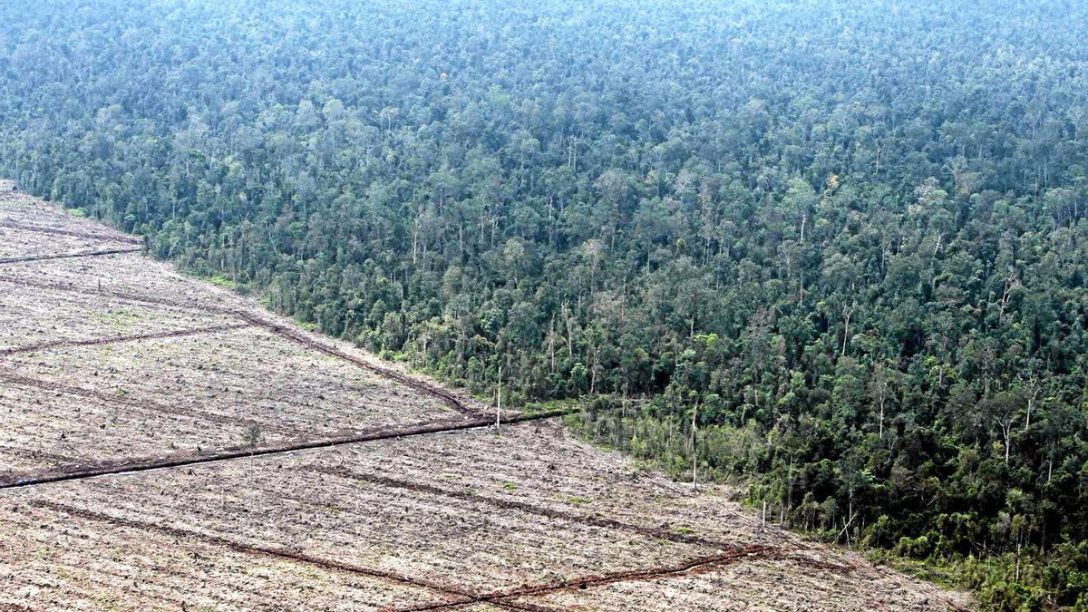A view of deforestation on Indonesia's Sumatra island, in this file photo taken August 5, 2010.