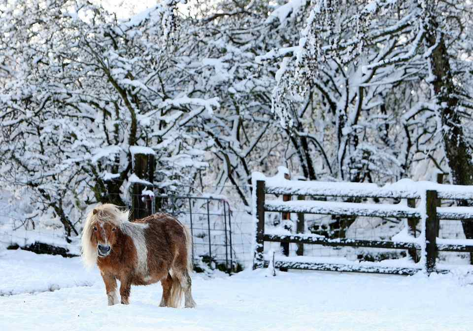 A lone shetland pony is seen surrounded by heavy snowfall at Anfield Plain, England Wednesday, April 4, 2012. Parts of Scotland and northern England have received 20 centimeters (8 inches) of snow, and 10,000 homes are without power in northeast England after wind brought down power cables.