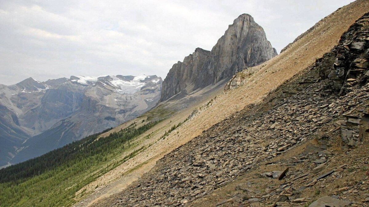 A team from the Royal Ontario Museam, the University of Toronto and the University of Cambridge are announced a major fossil discovery at Burgess Shale in Yoho National Park.