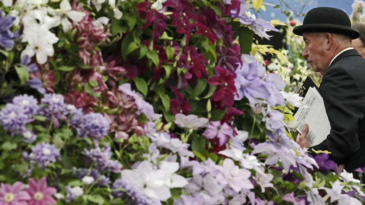 A judge examines a stand of clematis, on press day at the Chelsea Flower Show 2011, in London May 22, 2011.
