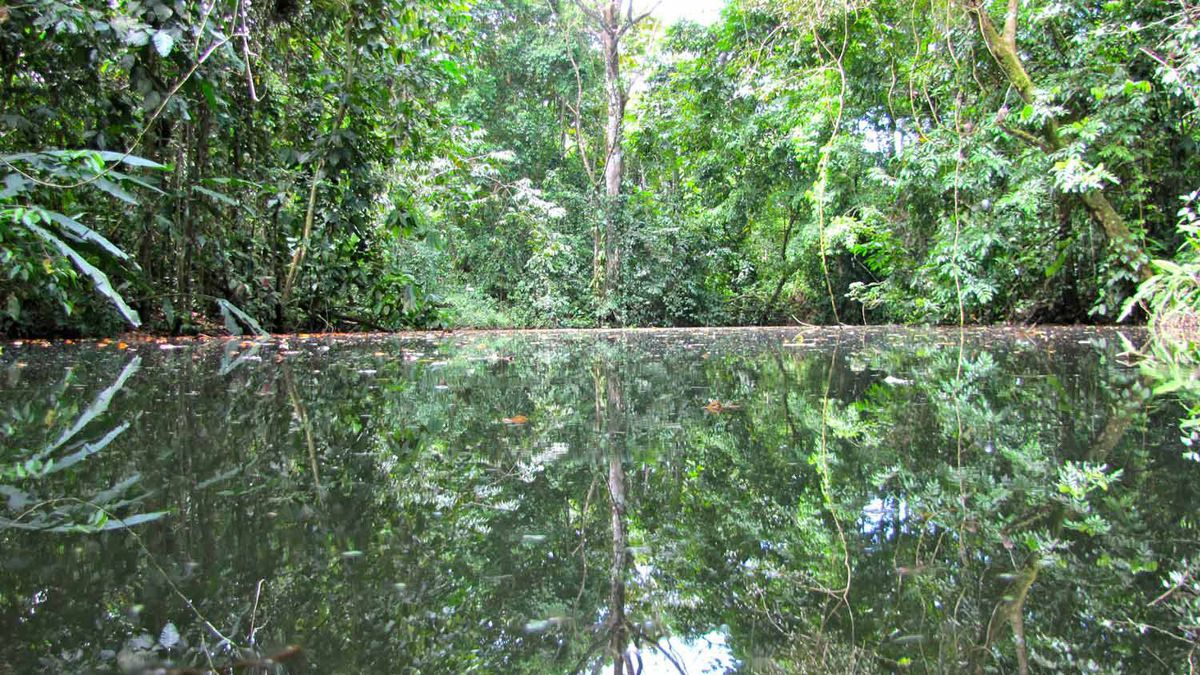 The surface of a lake deep in the Central American jungle looks quite benign but don't get out of the boat... never get outta the boat.