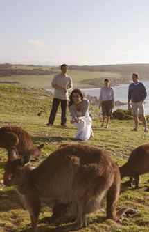 Kangaroo Island, Australia: Most often visited as a day trip from Adelaide, the South Australian island will see cruise ships anchor on its coast for bird watching, viewing of seal colonies and, of course, close encounters with kangaroos. Who's visiting: Holland America Line, Regent Seven Seas Cruises, Silversea Cruises