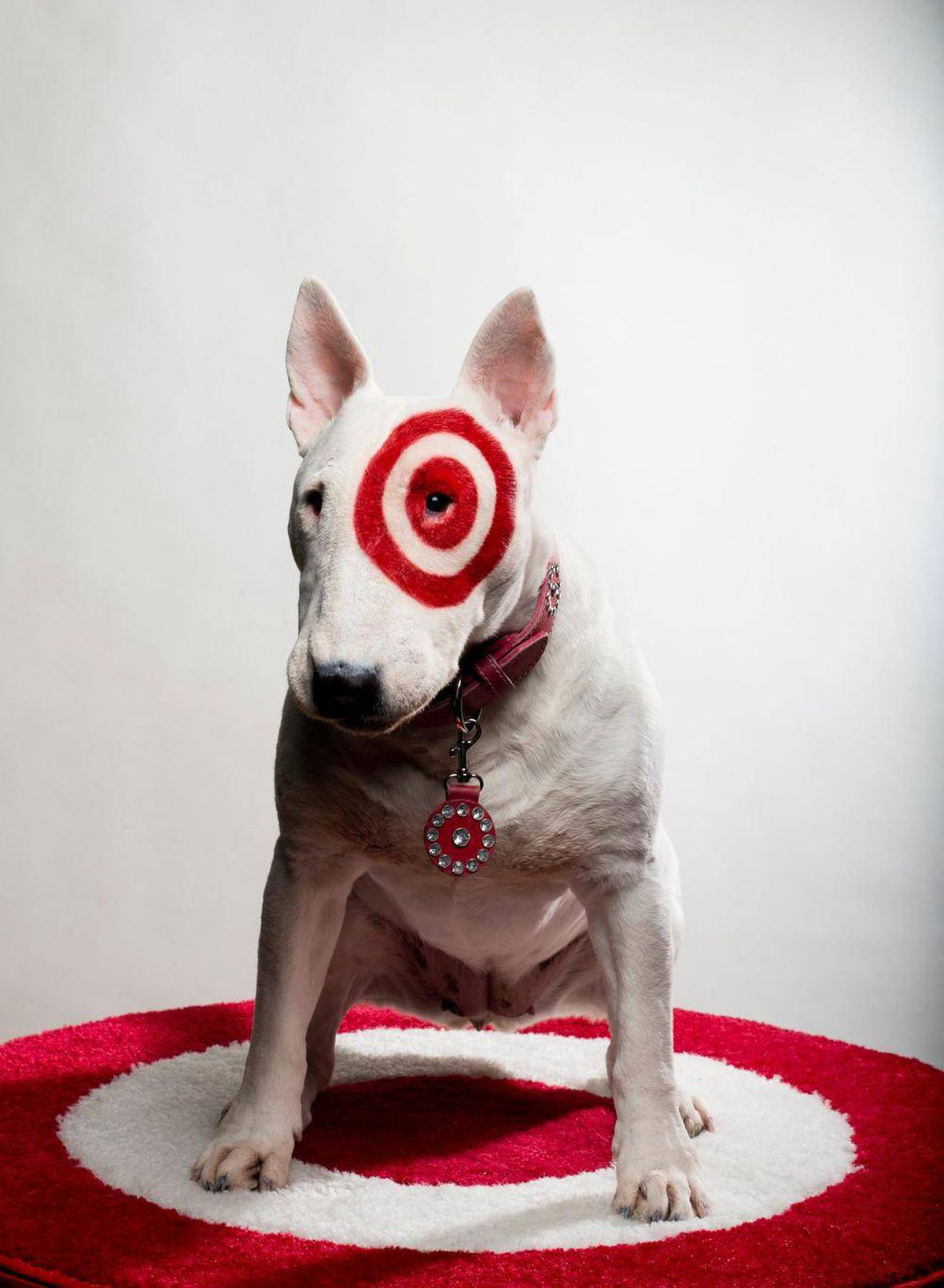 The secret life of target 39 s mascot bullseye the globe What kind of dog is the target mascot