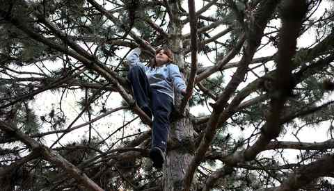 "Colin Stainton,11, sits in a tree he climbed near his home in Toronto on April 24, 2012. His mother says that is one of his favourite places to ""chill."" Stainton and his mother Cheryl Marsh took part in a program called the Coping Power Program, that helped Colin and Cheryl deal with Colin's anger. On Wednesday, CAMH will announce a $10 million donation from Margaret McCain for mental health programs for children and youth, that will be used, among other things, to hire more staff, create programs and start an inpatient unit for youth with both mental health and addictions."