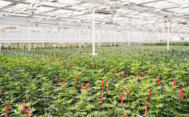 Aphria investment raises $100-million from unnamed institutional investor