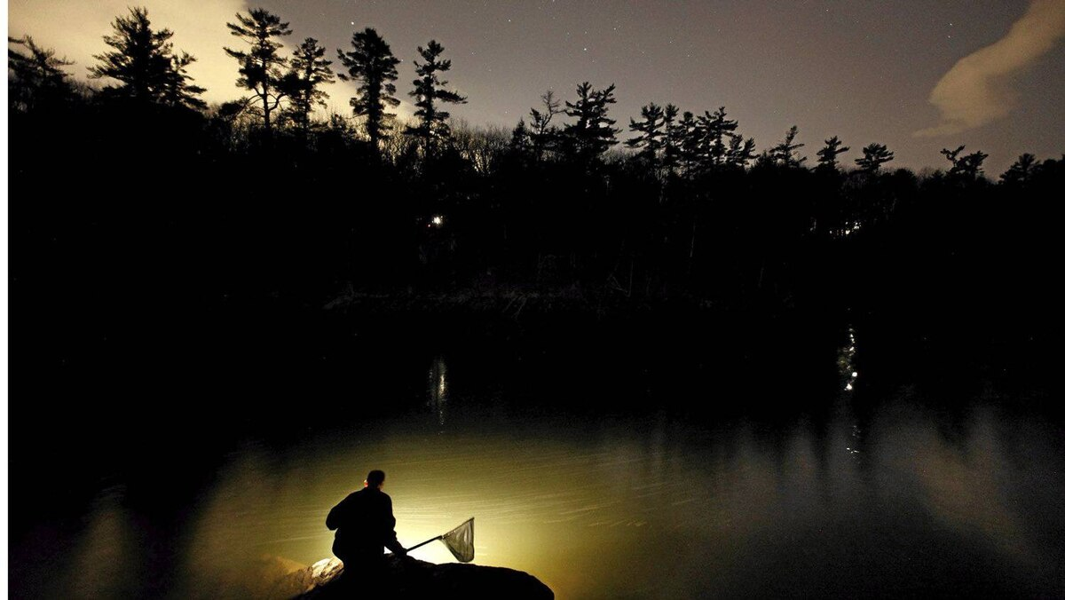 Bruce Steeves uses a lantern while dip netting for elvers on a river in southern Maine. Elvers are young, translucent eels that are born in the Sargasso Sea and swim to freshwater lakes and ponds where they grow to adults before returning to the sea.