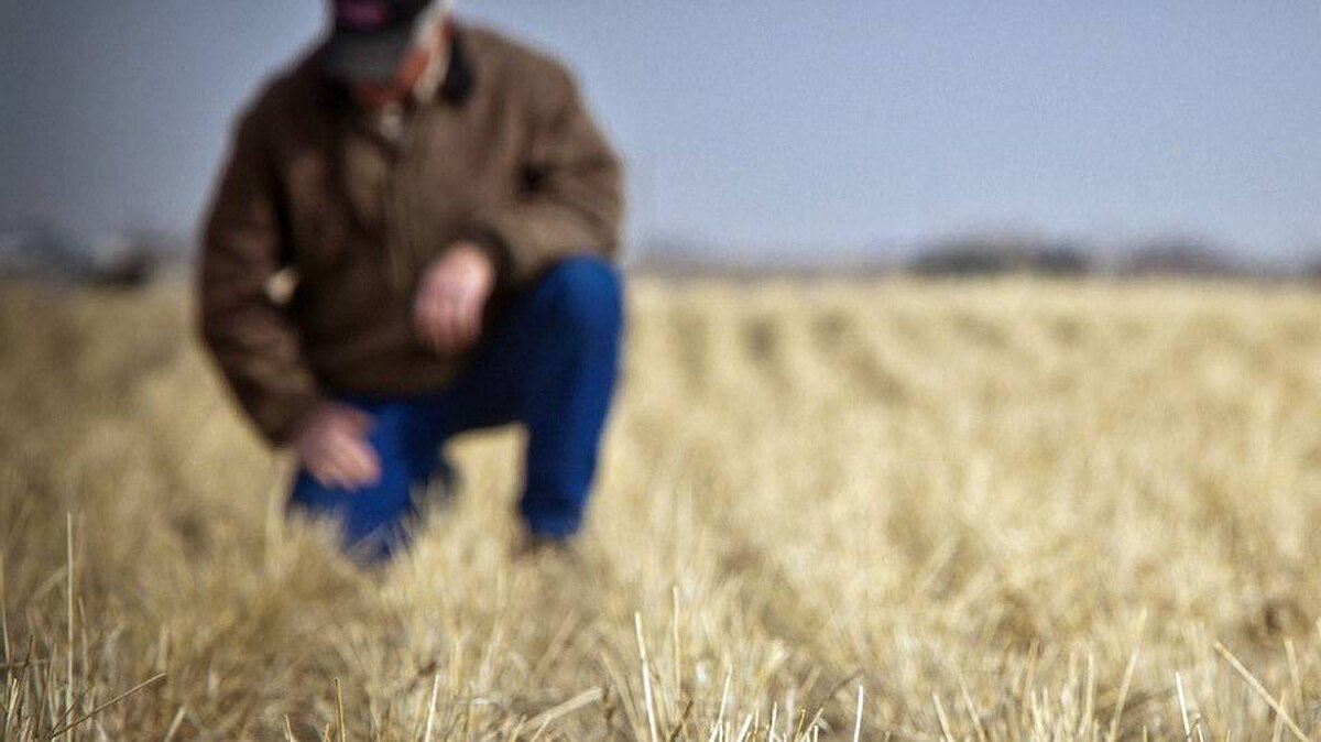 An Alberta farmer looks over dry and dusty pastures east of Calgary on April 06, 2010.