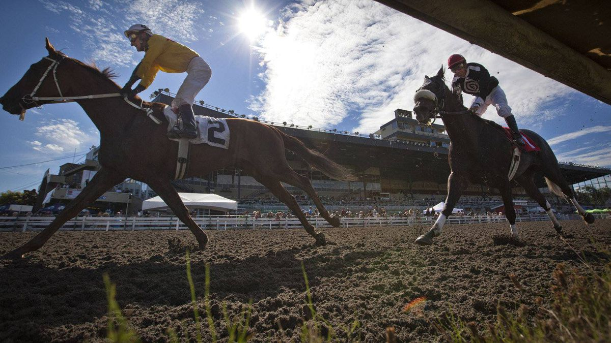 Richard Hamel, wearing yellow, rides Duelling Pistol in front of Pedro Alvarado on Honey's Monarch during the second race at Hastings race track in Vancouver Aug. 24, 2011.