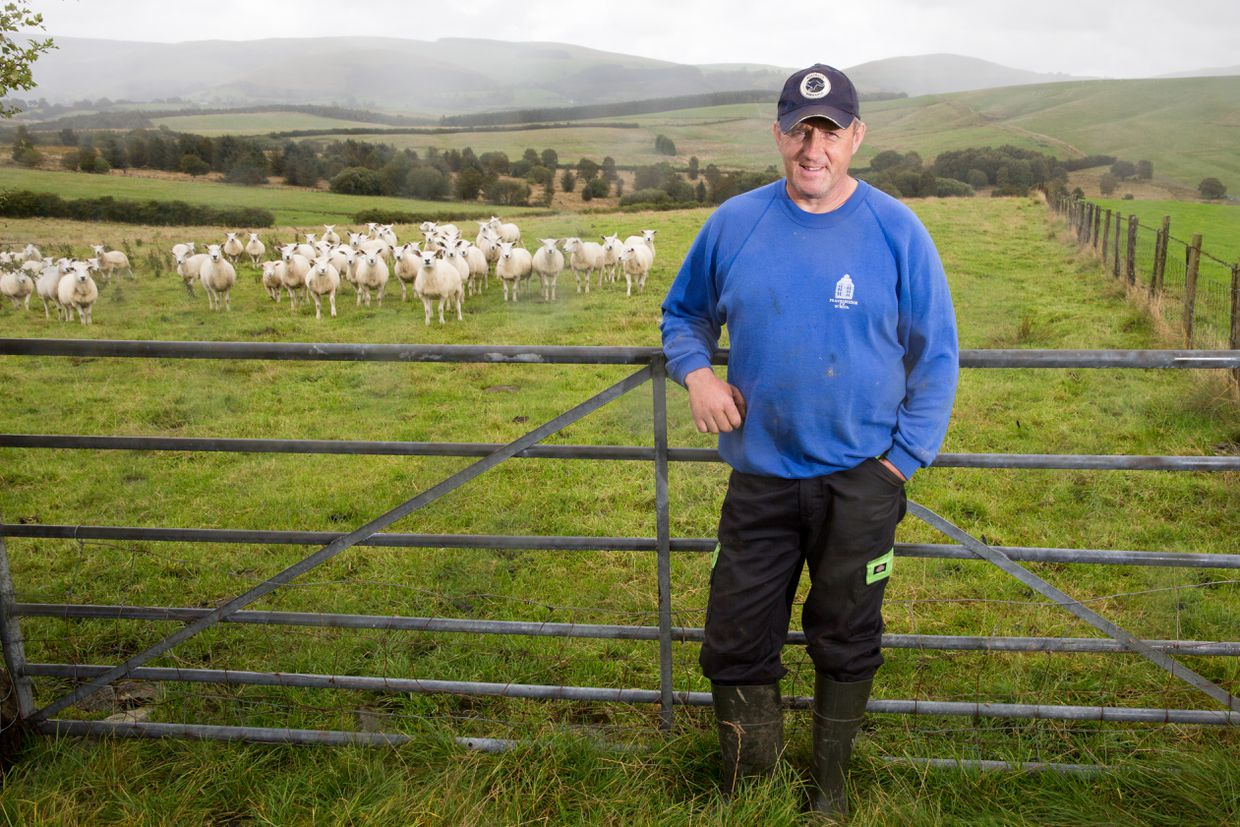 On green Welsh pastures, farmers fear lean years when Brexit comes