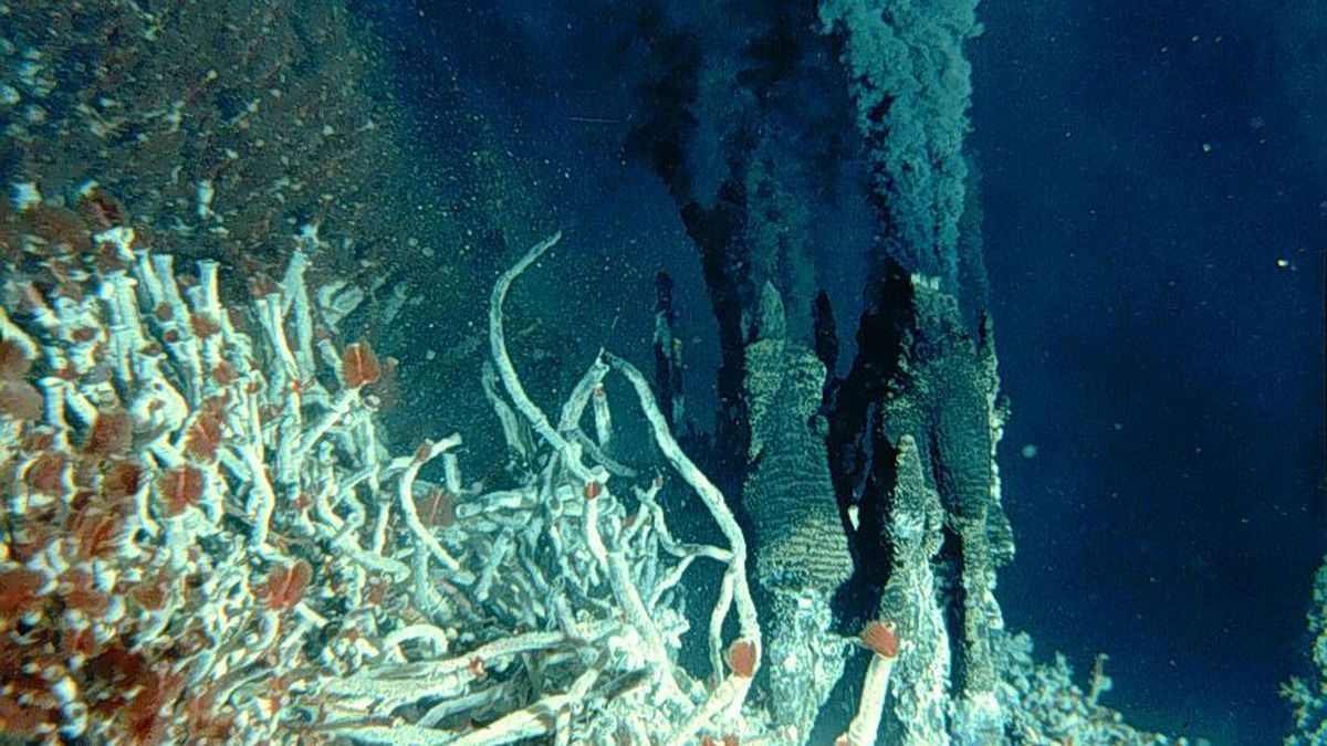 Undersea vents spewing carbon dioxide into the oceans are a reliable way to see how the oceans will acidify due to climate change, Jason Hall-Spencer says.
