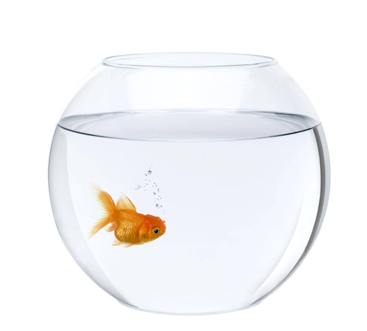 Review bradley somer s fishbowl tackles loneliness love for Aquarium bocal poisson