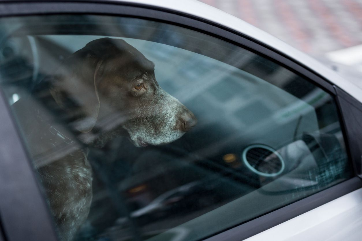 Scientists develop device to prevent drivers from leaving children, pets alone in cars
