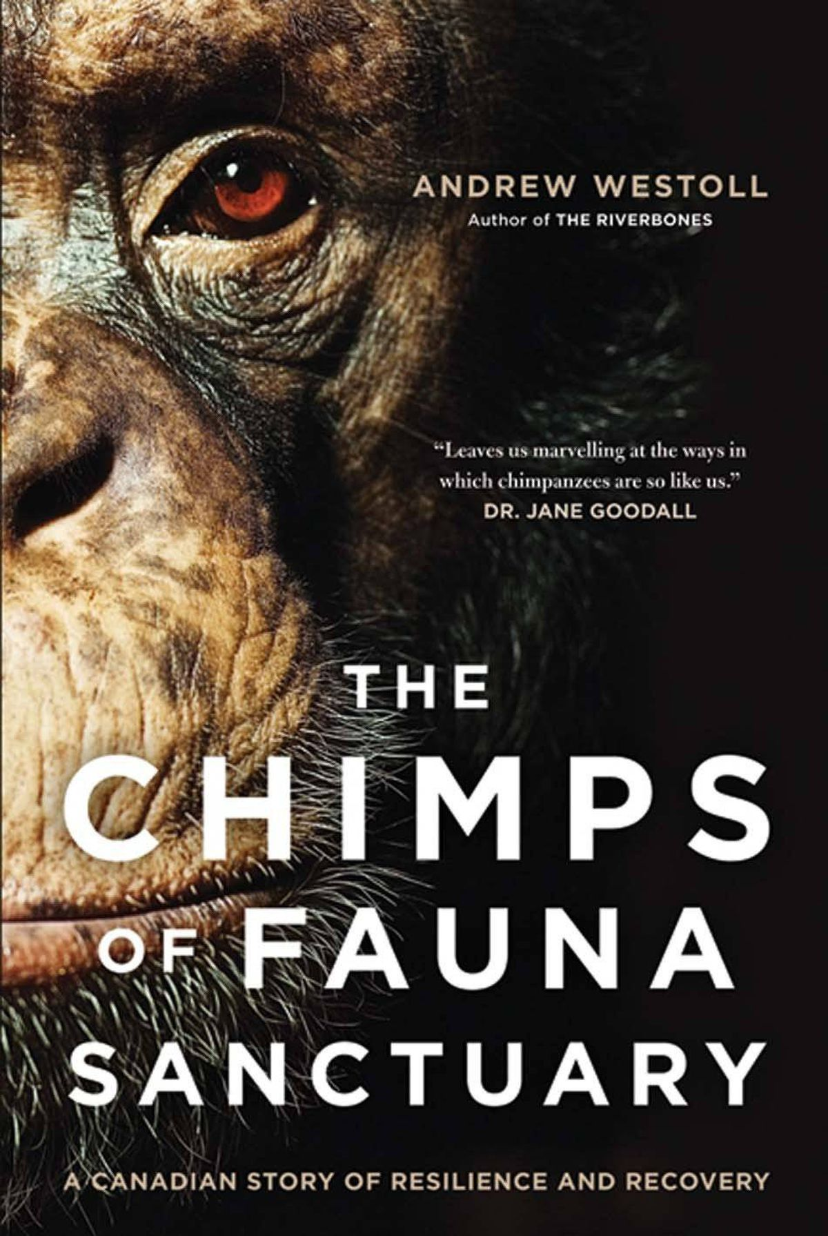 THE CHIMPS OF FAUNA SANCTUARY A Canadian Story of Resilience and Recovery By Andrew Westoll (HarperCollins) Westoll's account of Gloria Grow and her Quebec sanctuary for damaged creatures should make us rethink what it is to be human – and animal. It's an opera of dramatic events, heart-rending tragedies and uplifting triumphs. For anyone interested in empathy and recovery, this book is required reading. – Linda Spalding
