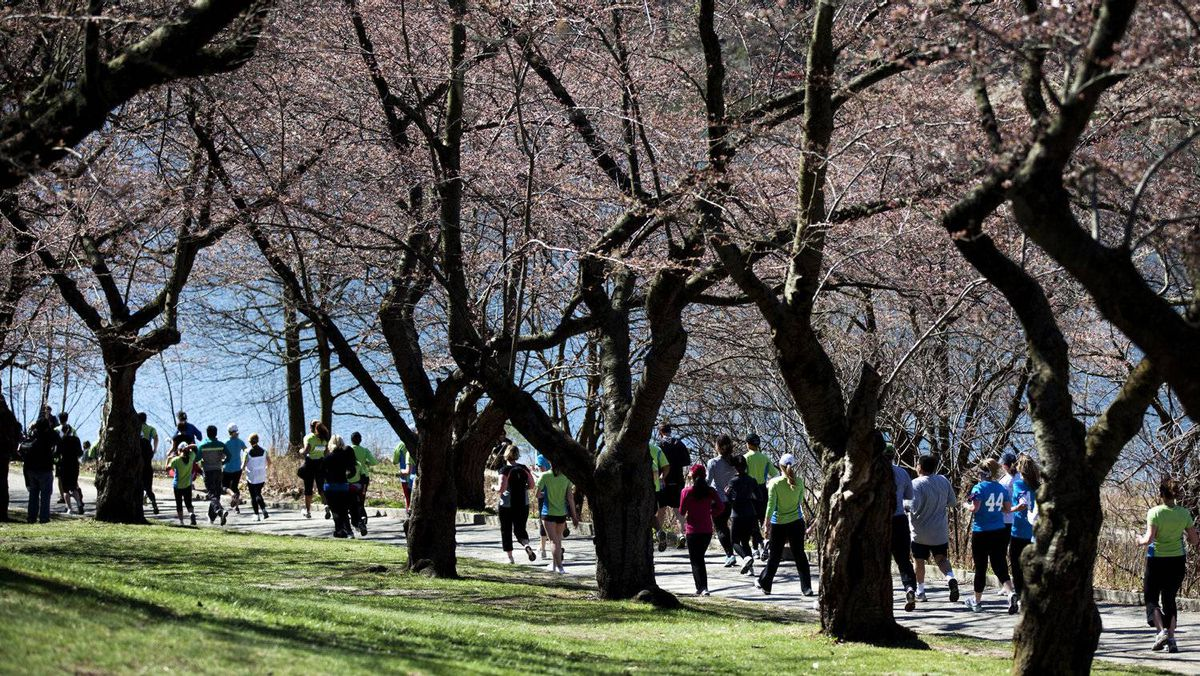 Runners speed past the cherry blossoms during Harry's Spring Run-Off.