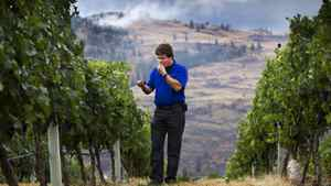 Glen Fawcett President of Black Hills Eastate Winery looks over his grapes at the Black Hills Vinyard in Oliver, B.C. Oct. 3, 2011.