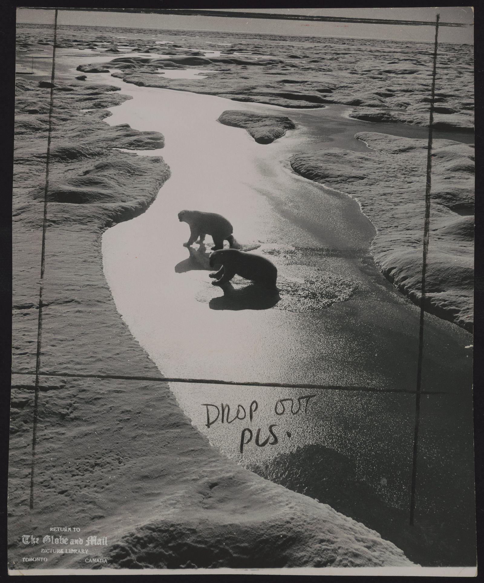 POLAR BEARS In the Arctic.