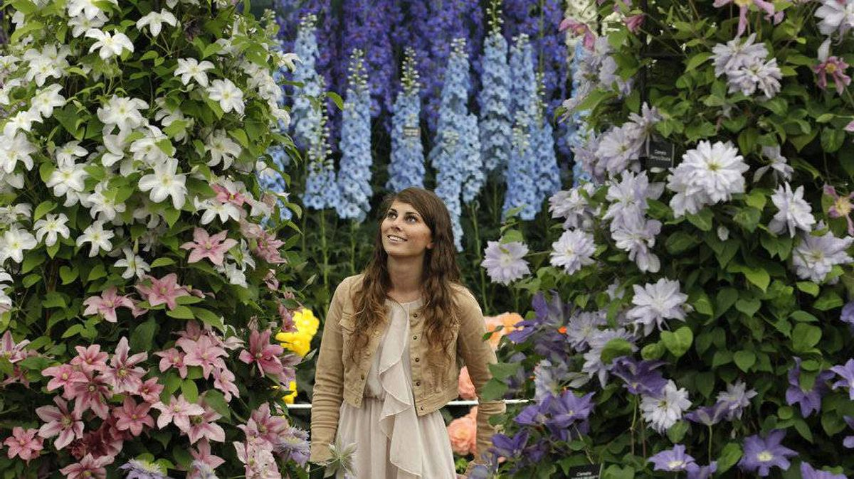 An exhibitor poses with clematis and delphiniums during press day at the Chelsea Flower Show 2011, in London May 23, 2011.