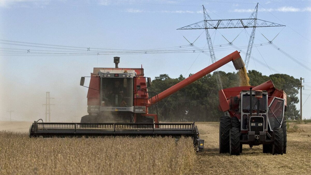 A farmer harvests soy beans in Argentina