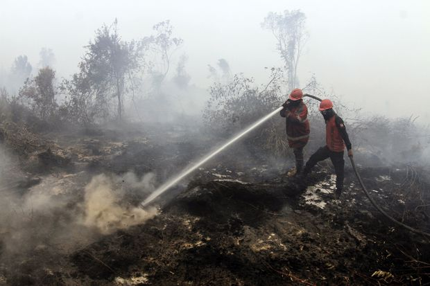 Government to act against Malaysian companies responsible for haze - Mahathir