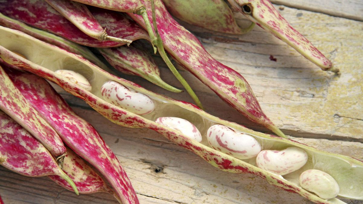 Cranberry beans are colourful and tasty.