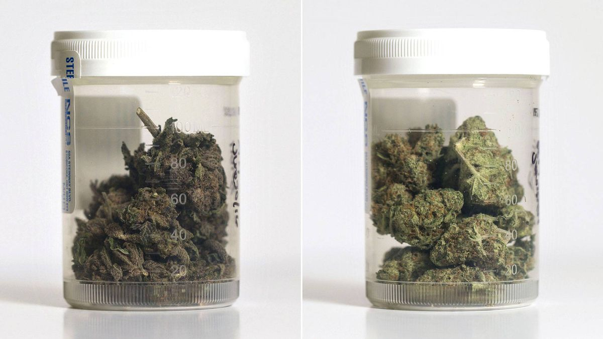 Globe Investigation: What's in your weed? We tested