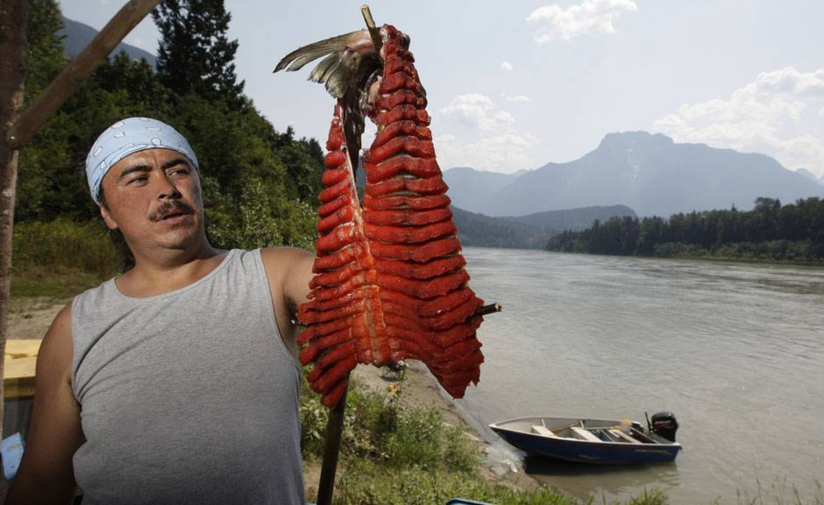 Tyrone McNeil of the Sto;lo Tribal Council holds a sockeye salmon cut in the tradition of his mother to be hung on a dry rack to cure for up to ten days on the banks of the Fraser river near Hope, BC.