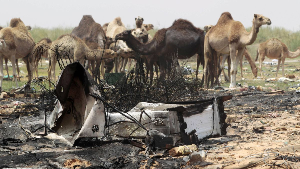 Camels walk pass an area bombed by coalition air strikes last night according to the Libyan government, in Tripoli on June 8, 2011.