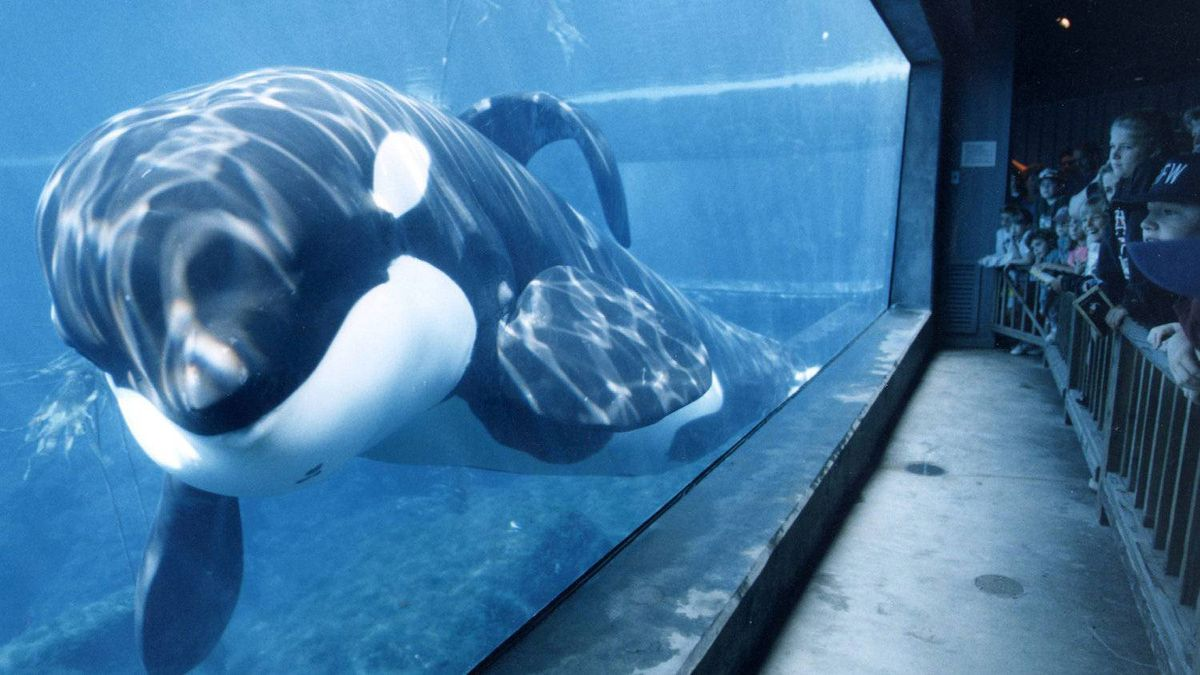 In this 1998 photo shows famed killer whale Keiko, at the Oregon Coast Aquarium, in Newport, Ore. Animal rights group says SeaWorld whales are entitled under the 13th Amendment that abolished slavery
