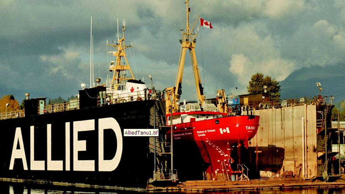 "The Canadian Coast Guard ship ""Tanu"" in Allied Shipbuilders' floating drydock."