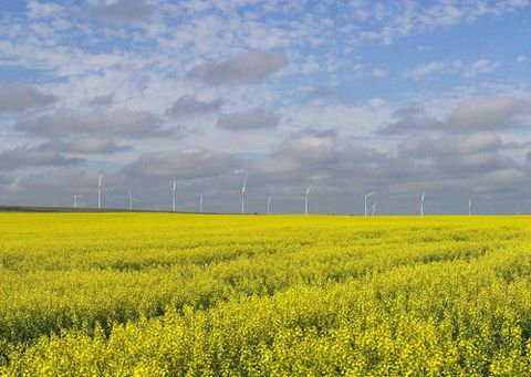 Canada's canola play continues to pay off