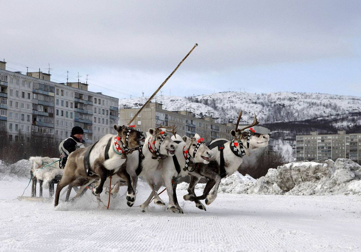 A competitor guides his reindeers during a reindeer race at the Festival of the North in Russia's arctic seaport of Murmansk April 1, 2012. Residents of Russia's north celebrate the annual festival to welcome spring and mark the end of the long winter with various winter sports competitions.