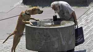 A man and a dog drink water from a fountain during a sunny day in Prague as temperatures hovered over 28 degrees Celsius on July 12, 2011.