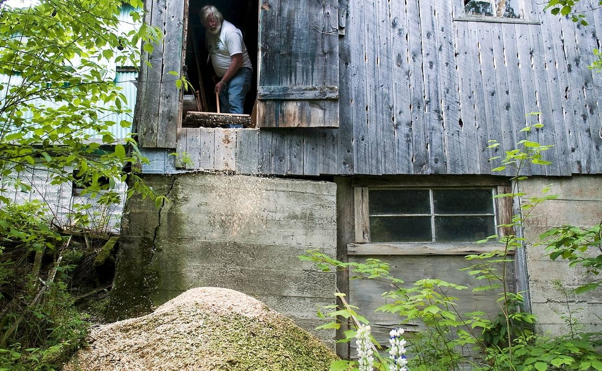 Bill Miller sweeps the sawdust left on his workshop floor out a back door onto a mound from previous work. Although Mr. Miller's workshop looks scattered and disassembled, he knows exactly where everything is when he needs it.
