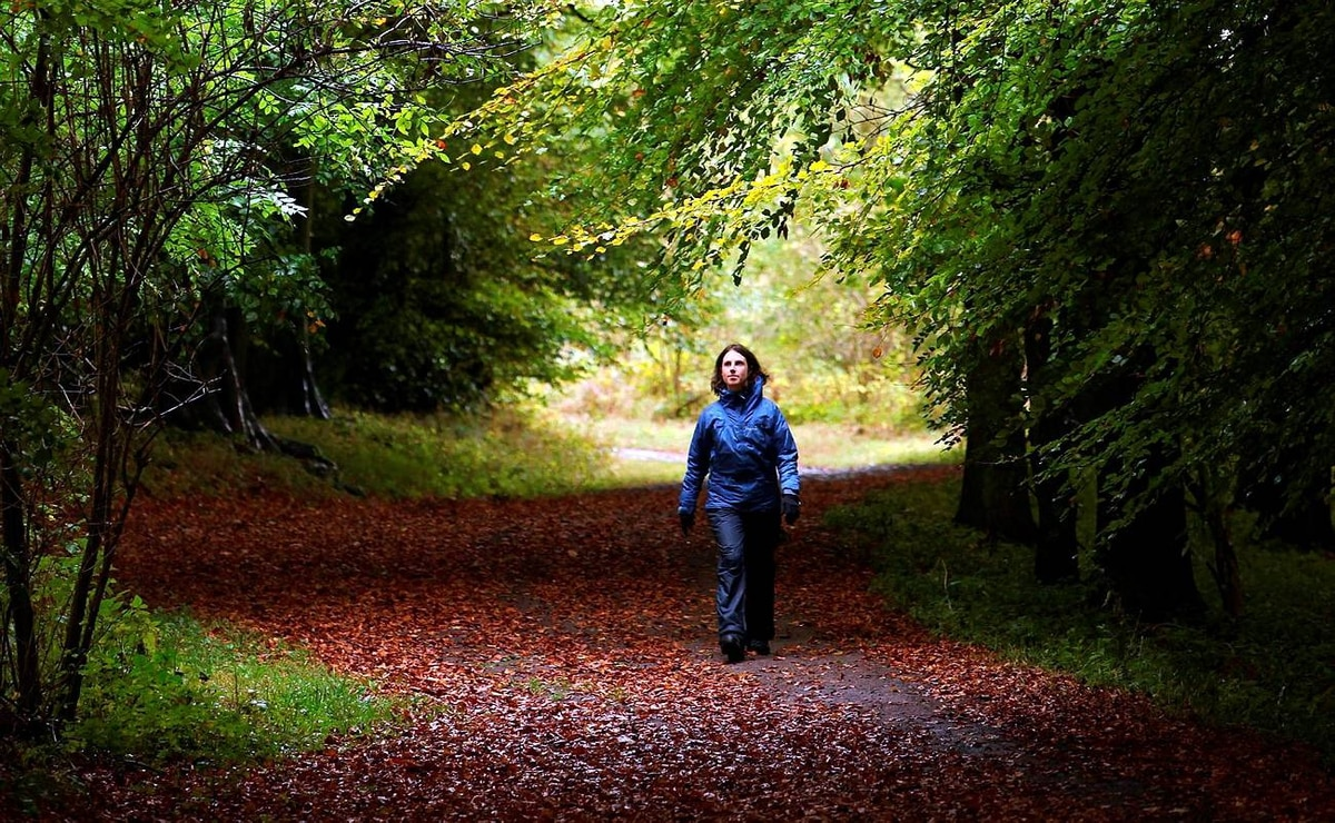A woman walks along a path lined with deciduous trees in Wendover Woods on October 11, 2009 in Buckinghamshire, England. The Forestry Commission woods are situated on the northern edge of the Chiltern escarpment and cover 325 hectares with coniferous and broadleaved woodland.