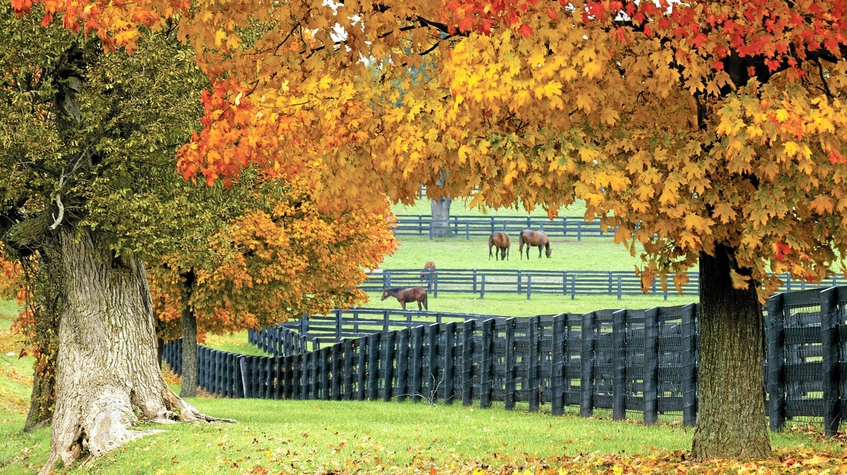 The genteel precision of the immaculately fenced rolling hills tells visitors they've crossed into Kentucky.