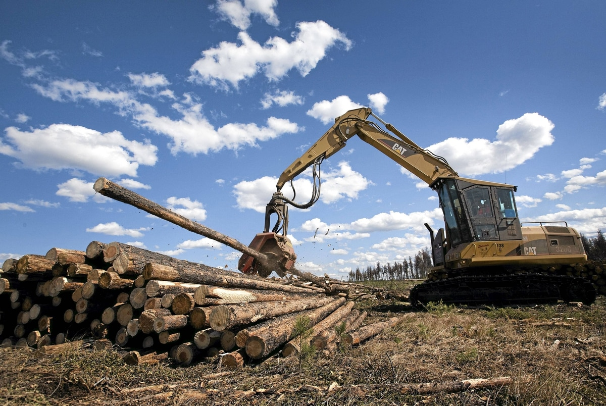 A logging operation in Williams Lake, B.C.