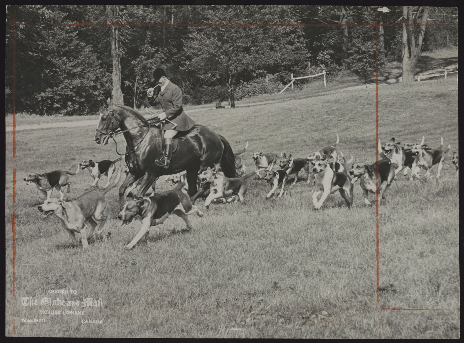 TORONTO AND NORTH YORK HUNT CLUB Master of Hounds Fred Pickford leads pack at Toronto and North York Hunt's race day yesterday.