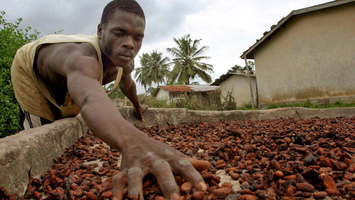 cocoa crisis in ivory coast